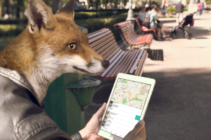 fox-with-iPad-notext-2